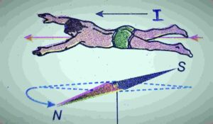 Ampere's swimming rule to find the direction of magnetic field